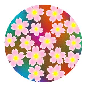 桜の花の写真素材 [FYI00245172]