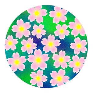 桜の花の写真素材 [FYI00245175]