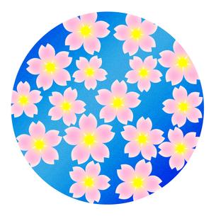 桜の花の写真素材 [FYI00245186]