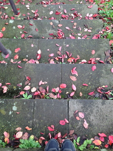 staircase with red leaves の写真素材 [FYI00245575]