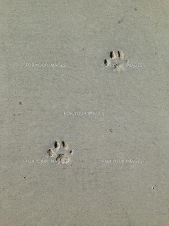 animal footprints の写真素材 [FYI00245586]