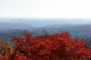 高尾山からの一望の素材 [FYI00245663]