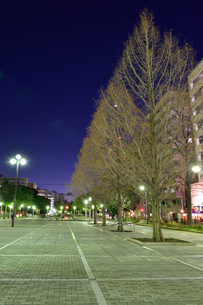 関内大通り公園の夜景の素材 [FYI00245669]