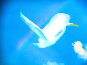 虹翔る鳥の写真素材 [FYI00245675]