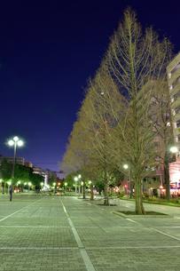 関内大通り公園の夜景の素材 [FYI00245711]