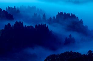 霧の湧く神秘的な森の素材 [FYI00245728]