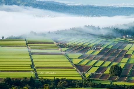 霧の湧く山の田んぼと畑の素材 [FYI00245729]