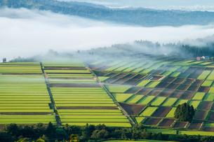 霧の湧く山の田んぼと畑の写真素材 [FYI00245729]