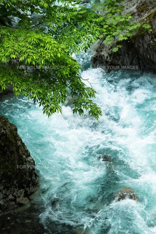 渓流の清い流れの素材 [FYI00245825]