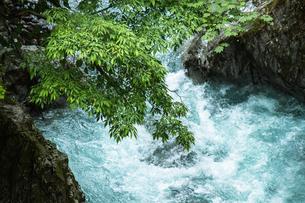 渓流の清い流れの素材 [FYI00245826]