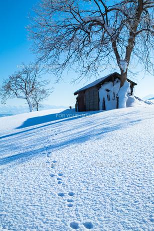 新雪の上のウサギの足跡の素材 [FYI00245832]