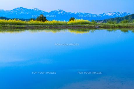山古志 菜の花の咲く養鯉池と越後三山の素材 [FYI00245839]