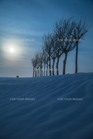 ハサ木と満月の雪景色の素材 [FYI00245851]
