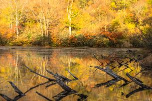 道院高原 光り輝く紅葉の池と写り込みの素材 [FYI00245906]
