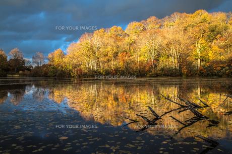 道院高原 光り輝く紅葉の池と写り込みの素材 [FYI00245918]
