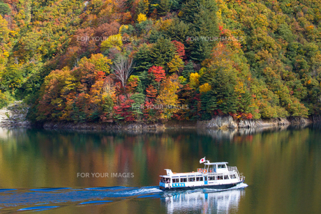 奥只見湖 紅葉と美しい航跡を描く遊覧船の素材 [FYI00245921]
