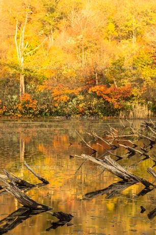 道院高原 光り輝く紅葉の池と写り込みの素材 [FYI00245926]
