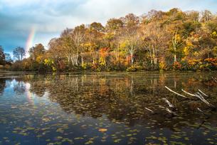 道院高原 光り輝く池の紅葉と虹の素材 [FYI00245929]