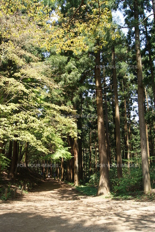 杉並木 山の写真素材 [FYI00245948]