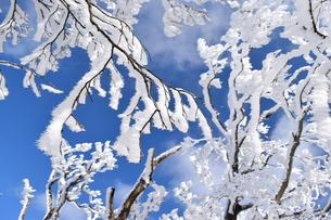 樹氷と針状結晶の写真素材 [FYI00246014]