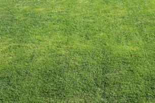 芝生の素材 [FYI00246197]