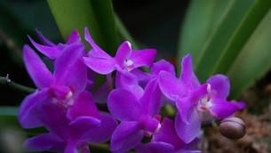 胡蝶蘭の賑わいの写真素材 [FYI00247106]