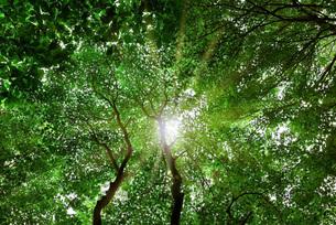 森林浴の写真素材 [FYI00247234]