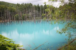 神秘の青い池の写真素材 [FYI00247250]