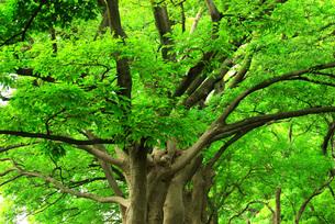 木々の息吹の写真素材 [FYI00247265]