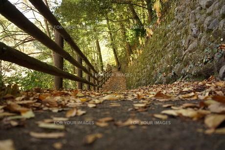 奥多摩の自然の写真素材 [FYI00247337]