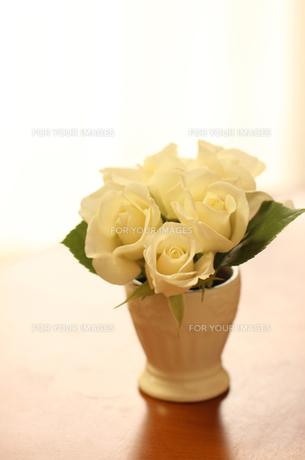 白いバラの写真素材 [FYI00247339]