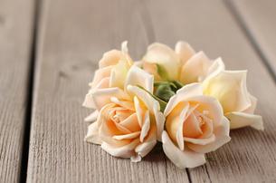ピンクのバラ(ペーパードール)の写真素材 [FYI00247349]