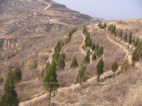 黄土高原03 植林現場の素材 [FYI00248599]