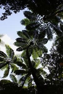 世界自然遺産候補地 奄美大島 原生林の素材 [FYI00248649]