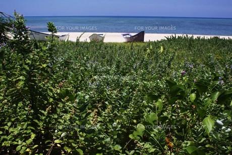 浜と草花の素材 [FYI00248650]