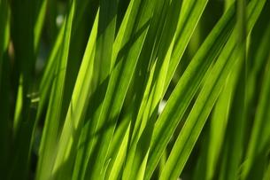 草と光の素材 [FYI00248661]