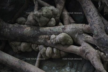 マングローブと岩の素材 [FYI00248697]