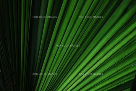 葉の素材 [FYI00248711]