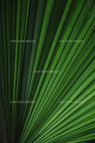 葉の素材 [FYI00248712]