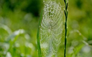 クモの巣の写真素材 [FYI00248763]