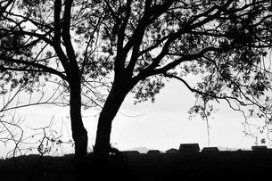 樹の写真素材 [FYI00248790]