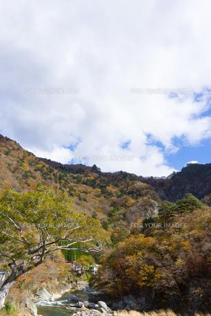 那須塩原 七ッ岩の吊橋から川を見るの素材 [FYI00248966]