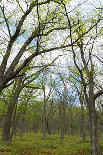日光 光徳牧場の初夏の森の写真素材 [FYI00248993]