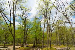 日光 光徳牧場の初夏の森の写真素材 [FYI00248999]