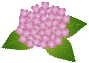 紫陽花の写真素材 [FYI00249080]