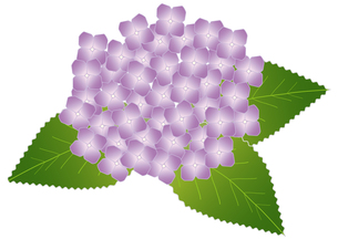 紫陽花の写真素材 [FYI00249083]