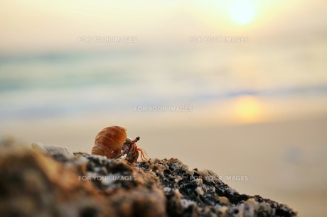 夕日とヤドカリの写真素材 [FYI00249220]
