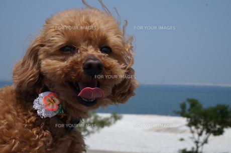 海風が気持ちいいねの写真素材 [FYI00249544]