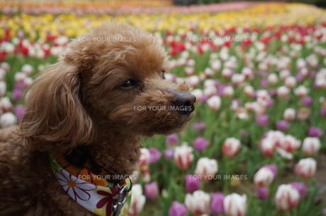 お花畑にての写真素材 [FYI00249569]