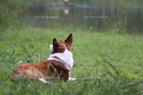 水辺の犬の写真素材 [FYI00249577]